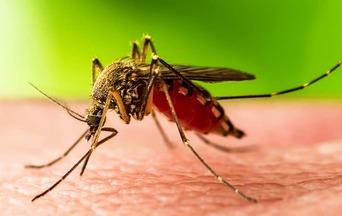a mosquito landing on a human and biting