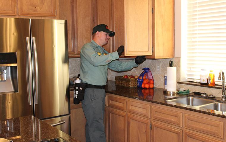 beaumont tx pest control technician inspecting kitchen for pests