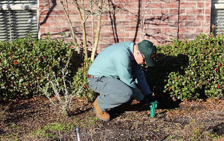 technician eradicating a termite infestation
