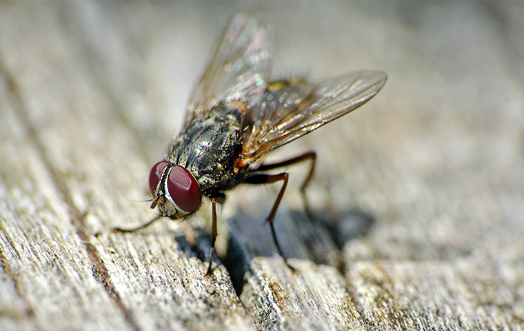 closeup of a fly on a piece of wood