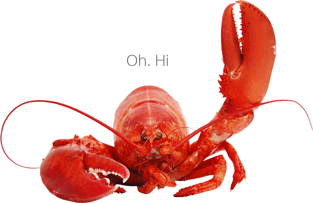 hello from lobster