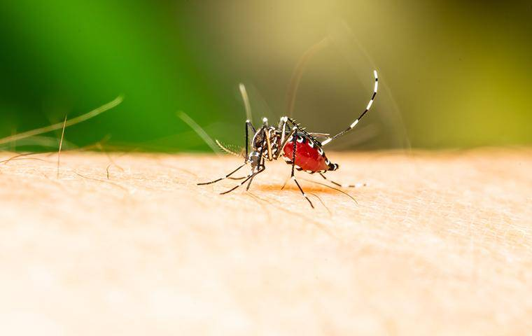 mosquitoes biting person