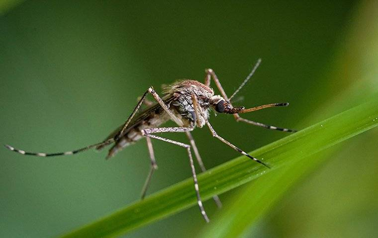 a mosquito that on a blade of green grass