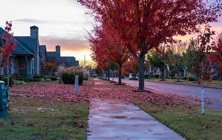 street in the fall with homes