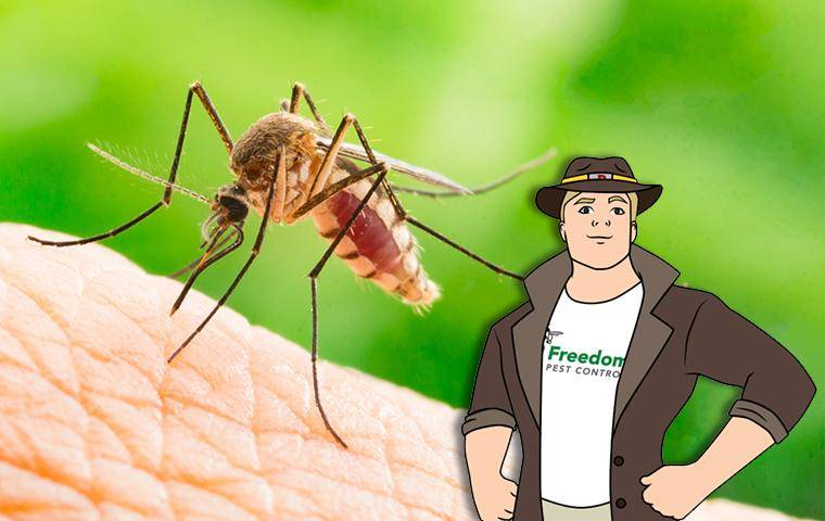 mosquito on skin with the mascot buster