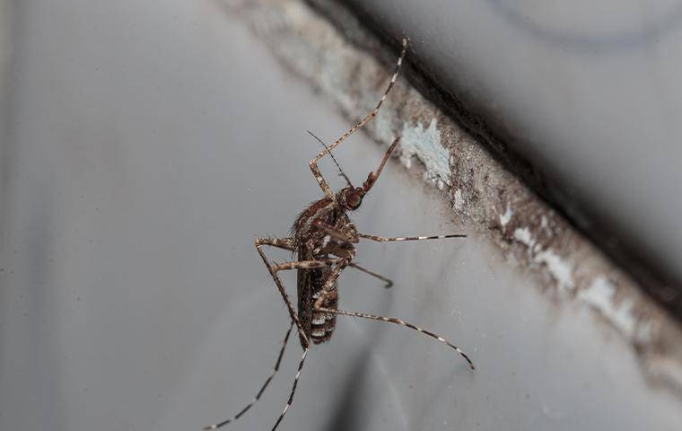 a mosquito on a wall
