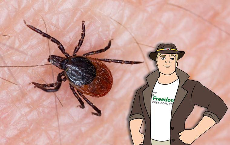 tick on skin with the mascot buster