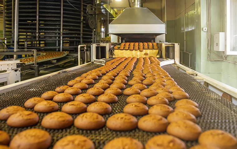 cookies on an assembly line in a food processing facility