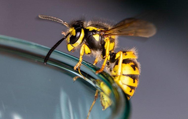 a wasp on a drinking glass