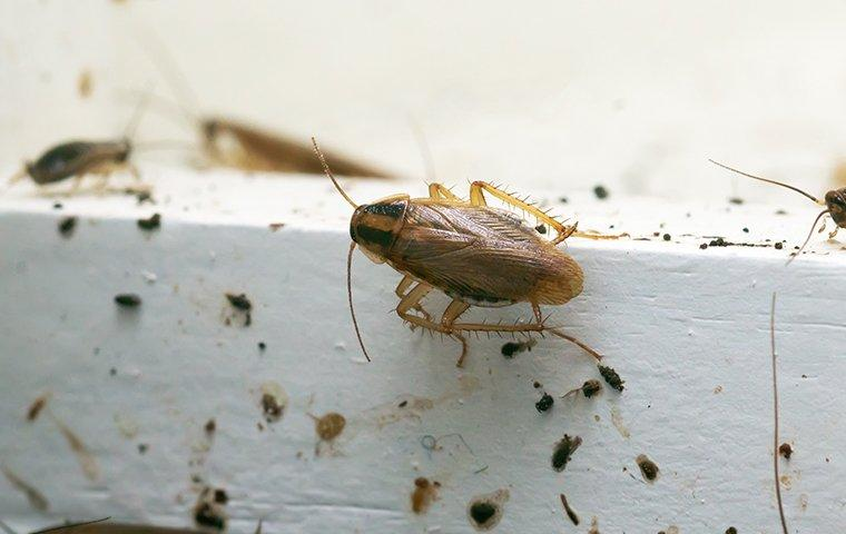 a cockroach in a kitchen
