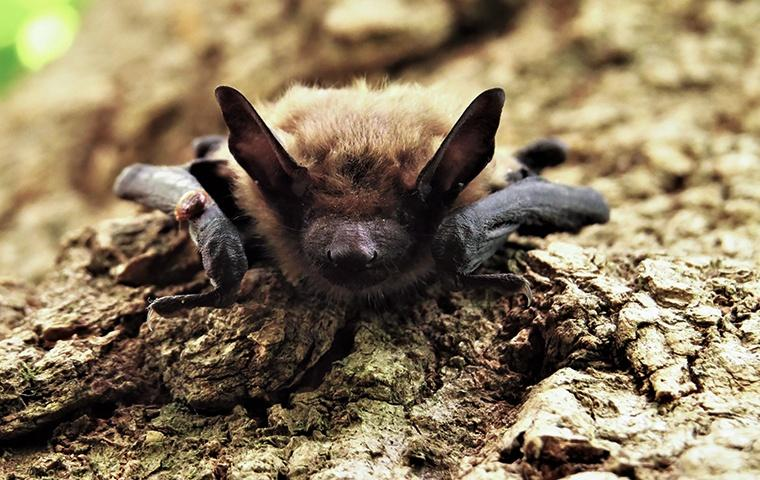 a little brown bat perched on a tree outside a home