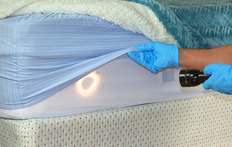 a pest control service technician inspecting a bedframe for bed bugs