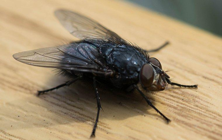 a house fly landing on a kitchen counter