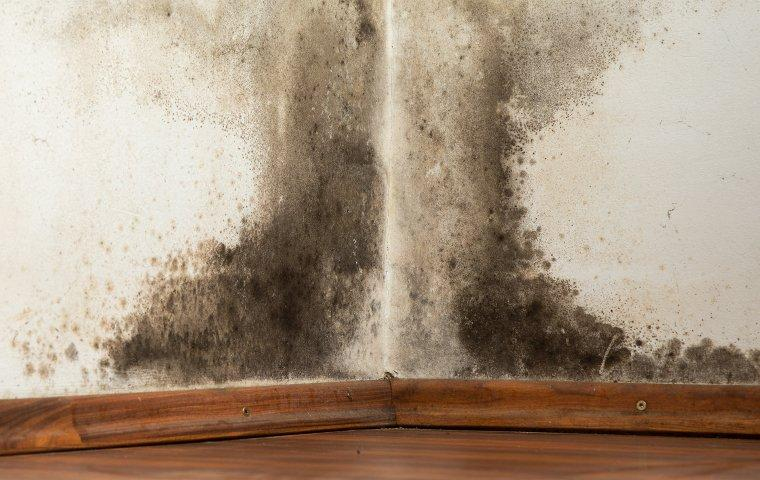 mold on a wall moisture control