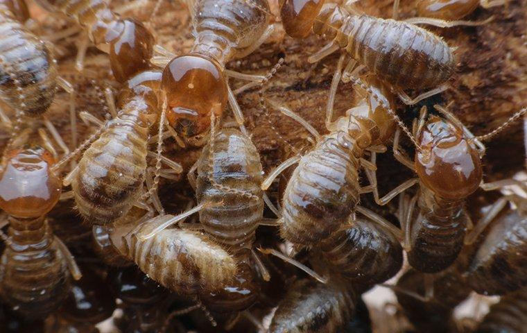 a group of termites in nest