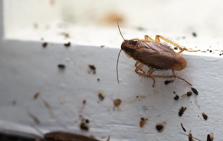 a cockroach crawling on a windowsill inside a home