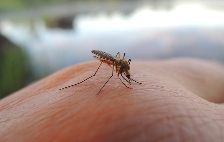 a mosquito biting a human hand