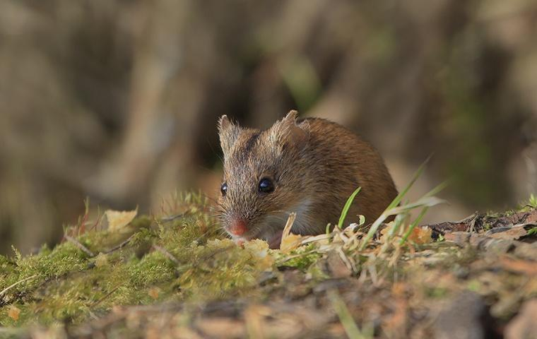 a small mouse on the ground outside a home
