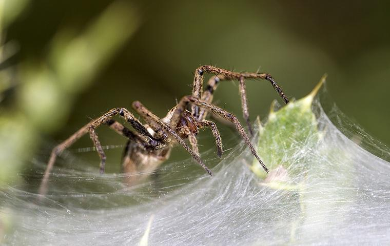 a spider spinning a web outside a home