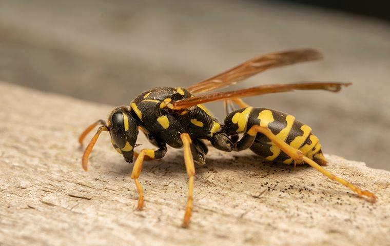 a wasp crawling on a wooden structure outside a home