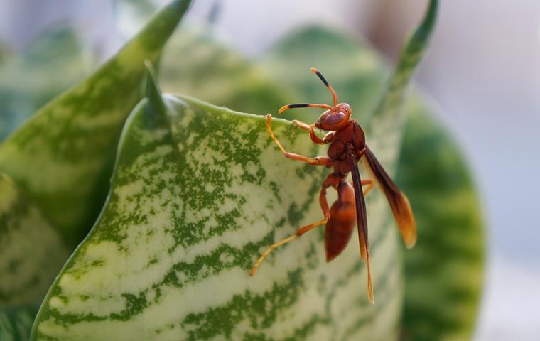 a paper wasp crawling on a leaf