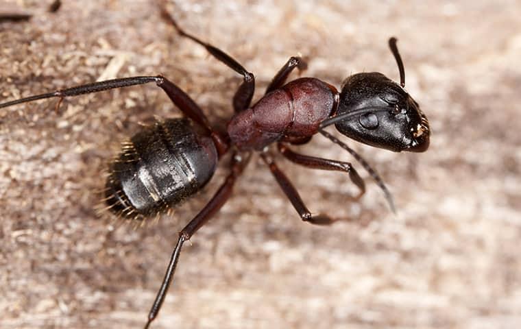 a black ant on gravel