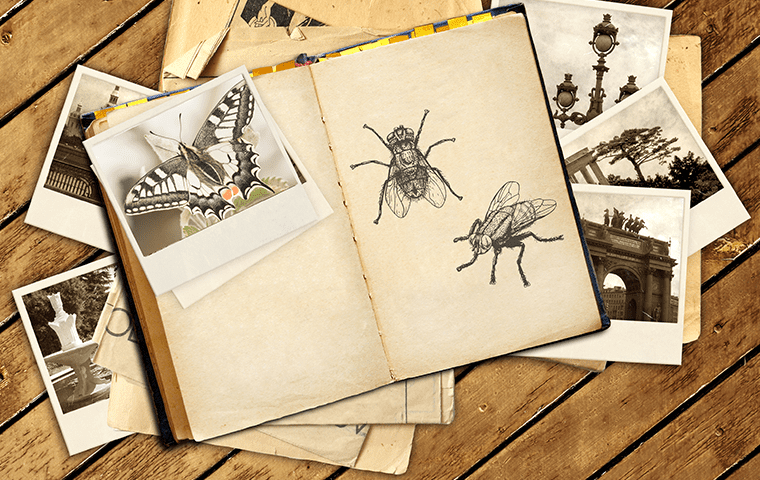 photo book with many different pests in it