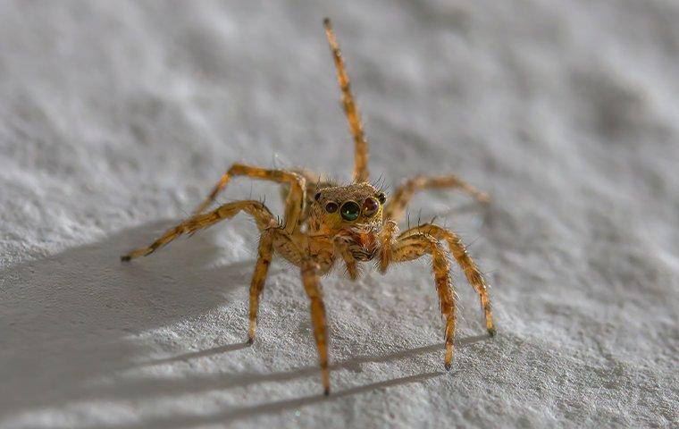 a jumping spider crawling on a floor at night