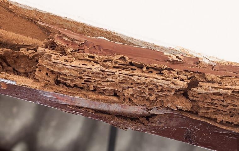 a wooden structure on a kansas city commercial site destroyed by termites during fall season