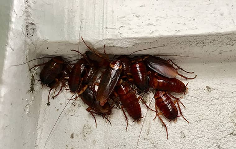 a group of roaches in a business in baldwin city