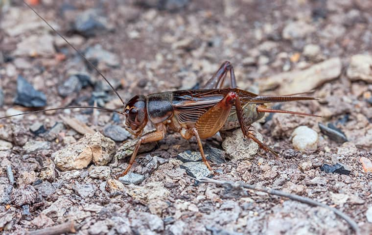 a cricket outside a business in spring hill kansas