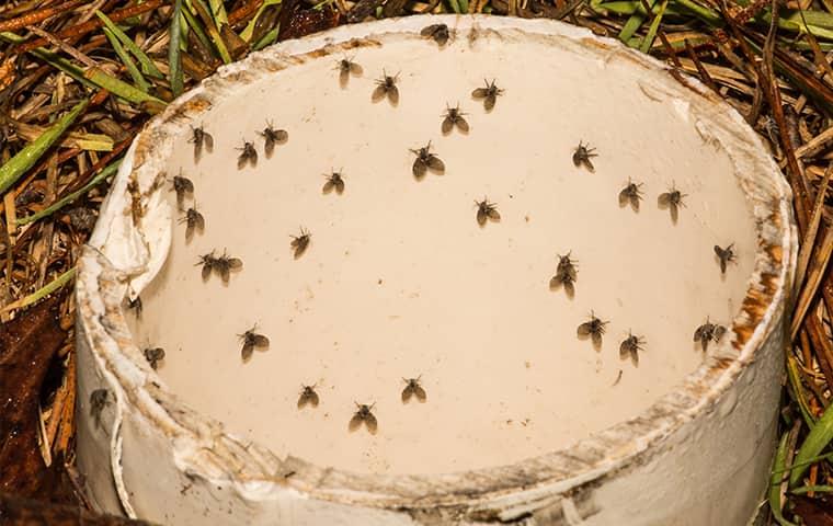 a swarm of drain flies on a drain pipe in wichita kansas