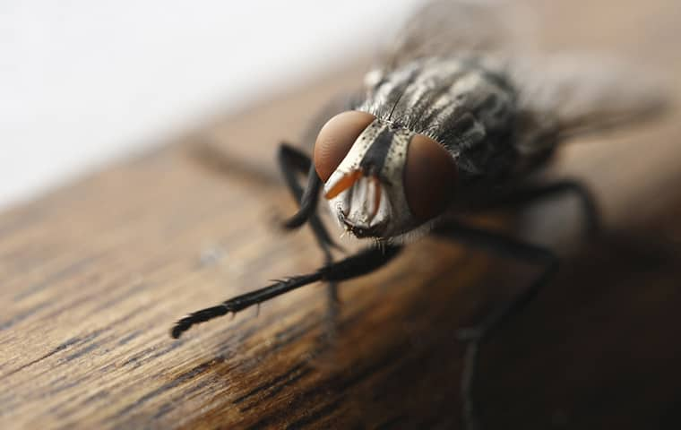 a house fly inside of a business in harrisonville missouri