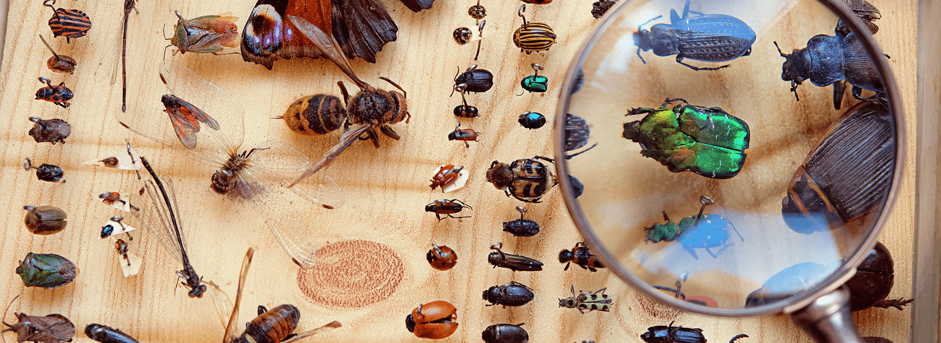 an entomology display case in wichita kansas