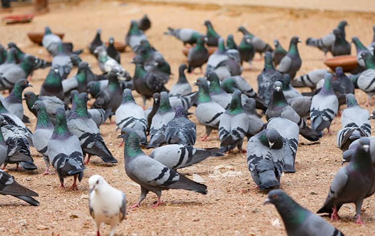 a flock of pigeons outside a business in arkansas city