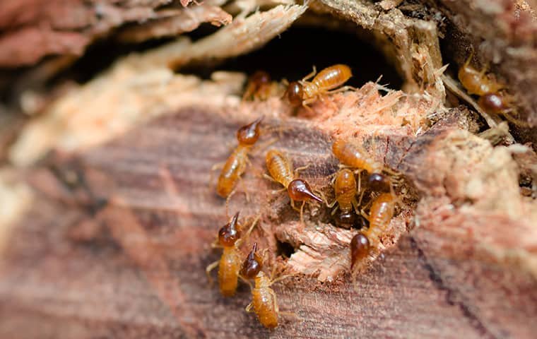 a termite infestation inside a woodpile in andover kansas