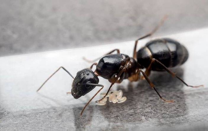 An ant on a countertop.