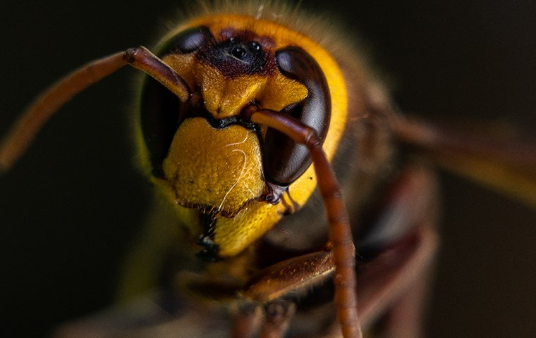 close up of a wasp in tarrant county texas