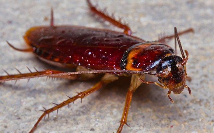 a cockroach crawling in a madisonville basement