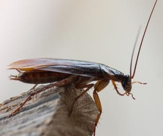a cockroach on a plank of wood
