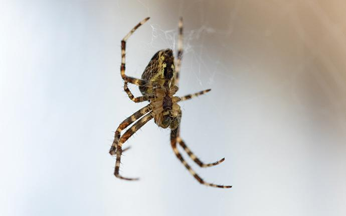 a house spider hanging in a web in hammond