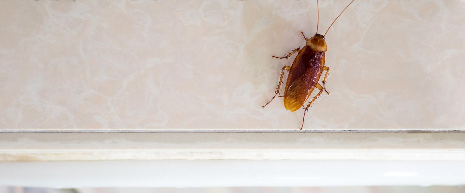 a cockroach crawling on marble