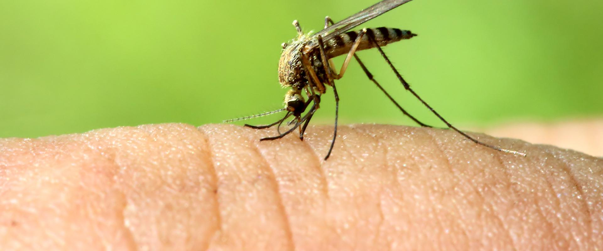 a close up of a mosquito on a finger