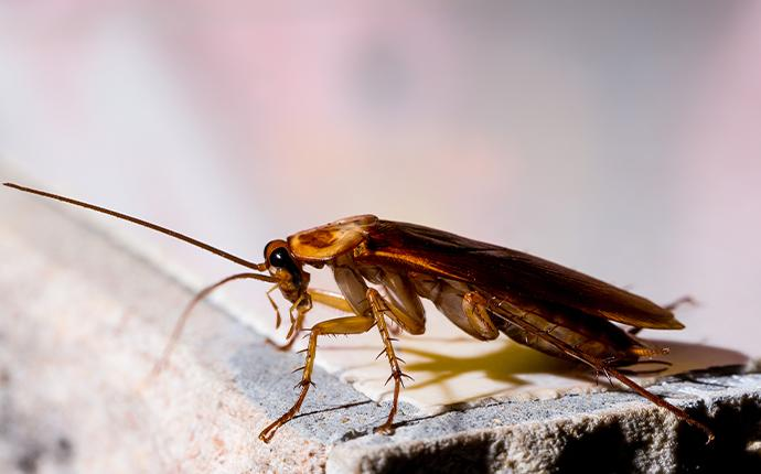 a cockroach resting on a piece of wood in baton rouge