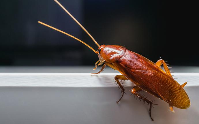 a cockroach sitting on a sink in baton rouge