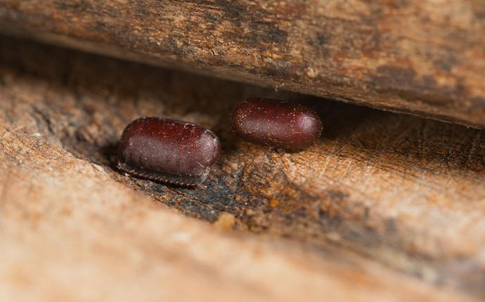 two cockroach eggs in baton rouge