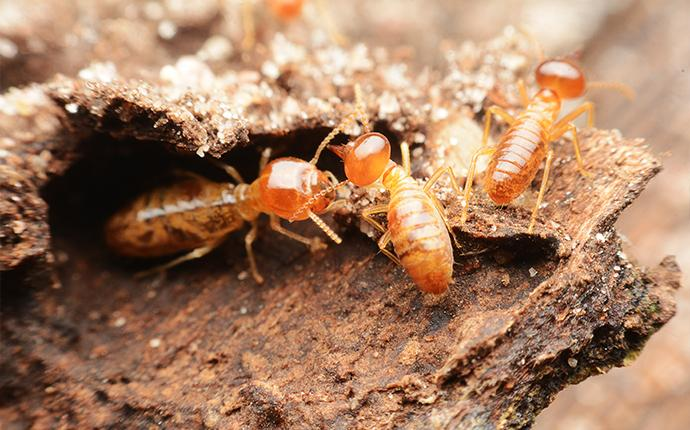 a close up of termites crawling in their mound