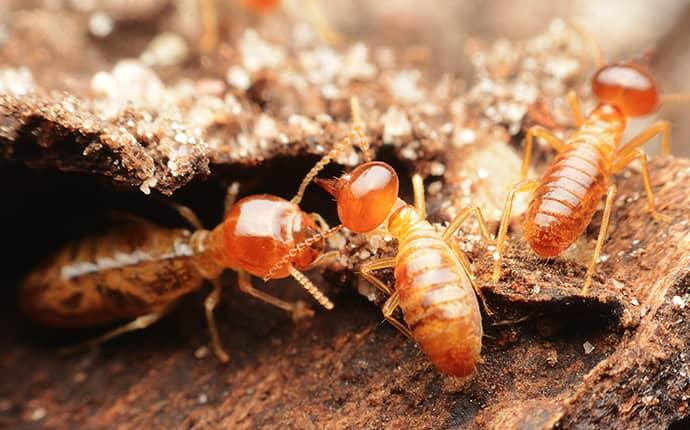 termites crawling on wood in walker