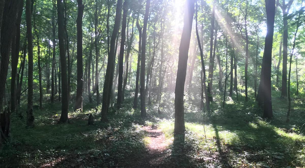 Sun shines into a forest.