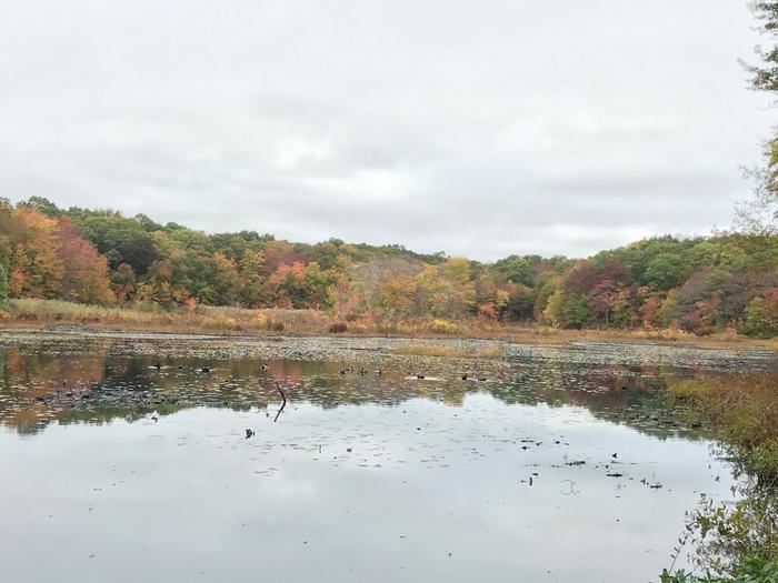 Beebe Pond (Credit: Kim Bradley)
